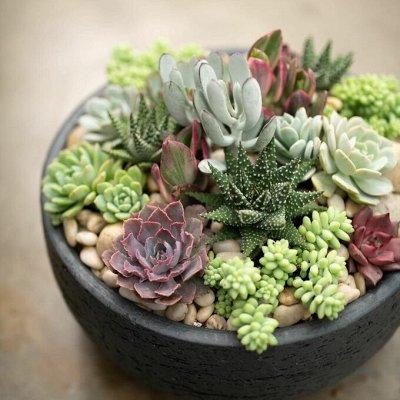 Огромный выбор комнатных растений в наличии! На любой вкус! — Кактусы и суккуленты — Комнатные растения и уход