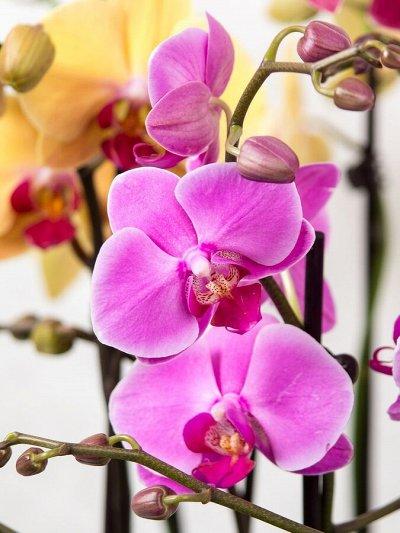 Огромный выбор комнатных растений в наличии! На любой вкус! — Орхидеи по сказочным ценам — Декоративноцветущие