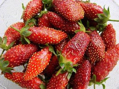 Земляника и земклуника на весну 2021.  — Земклуника (земляника х клубника) — Плодово-ягодные