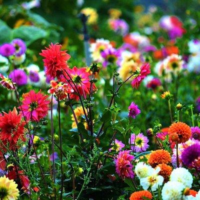 Товары для дома в наличии! Полотенца!  Большие скидки!  — Цветочный сад! Семена, саженцы, всё для сада.. — Семена
