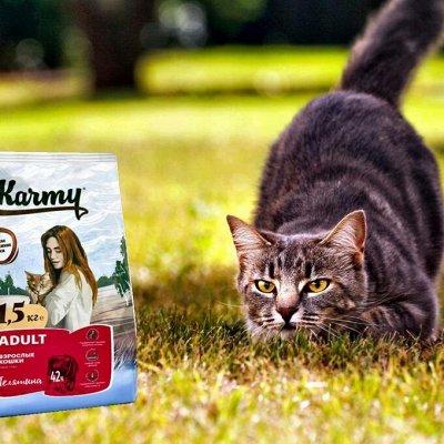 Karmy - корм для собак и кошек премиум класса! №26 — Лови скидки - Акция от Поставщика  !!! — Корма