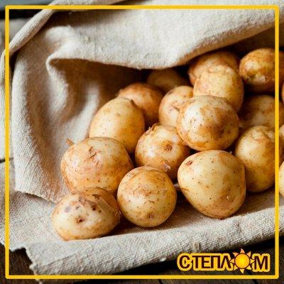 ☀ЗДОРОВЬЯ ВАШЕМУ ДОМУ☘Фермерские продукты☘Натурально!Вкусно! — ☘ОВОЩИ Фермерские (Грунтовые, Тепличные) — Свежие