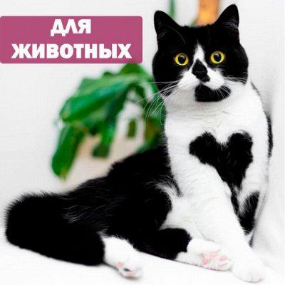 Дом и уют. Российские товары: посуда, быт. химия, хозка — Для животных — Пластмассовая посуда