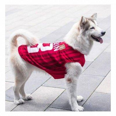 😺Ушки, лапки, хвостики. Популярная закупка для любимцев.🐶   — Комбинезоны для больших собак — Аксессуары и одежда