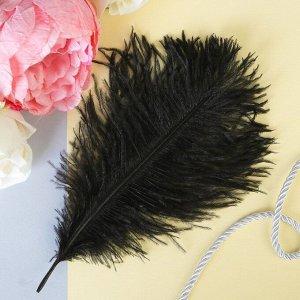 Перо для декора, размер 20,5?7,5 см, цвет чёрный