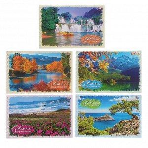 Альбом для рисования А4, 40 листов на гребне «Природа», картонная обложка, блок офсет 100 г/м2, МИКС