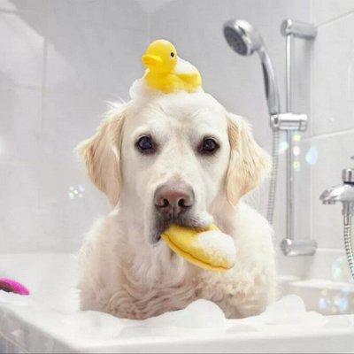 Быстро и выгодно! Полезные гаджеты для взрослых и детей — Шампуни для собак и кошек + очистка ушей! Корея