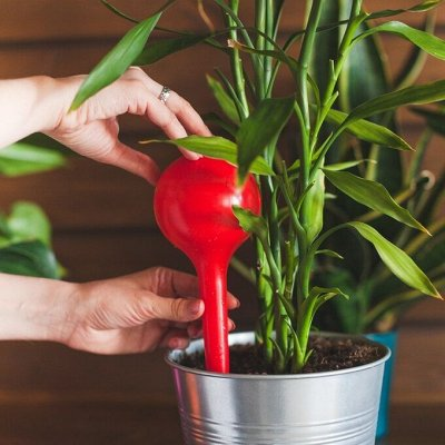 Товары для дома ОТ и ДО ! Быстрая доставка ! — Все для цветов — Комнатные растения и уход