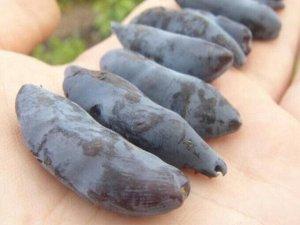 Жимолость Крупноплодный сорт жимолости среднего срока созревания. Кусты сильнорослые, мощные (в высоту — до 1,7 — 1,9 м, в ширину — до 1,3 м). Крона овальной формы, раскидистая. Разреженность кроны су