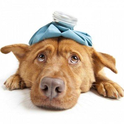🐶 Догхаус. Большая закупка зоотоваров  — Ветеринарные препараты — Для животных