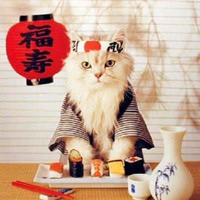 🔥Пристрой в наличии! Школа, зоотовары и многое другое🔥 — Японские зоотовары — Лакомства и витамины
