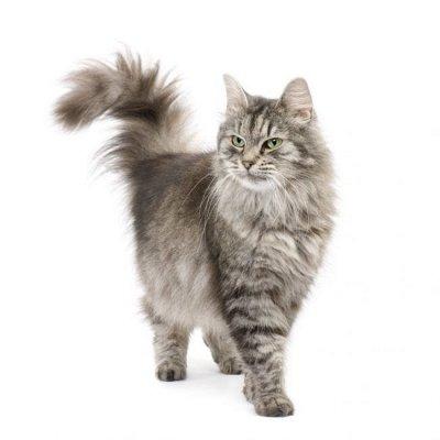 Догхаус. Быстрая закупка зоотоваров   — Груминг и аксессуары для кошек — Уход