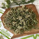 Тысячелистник (трава и цветы)