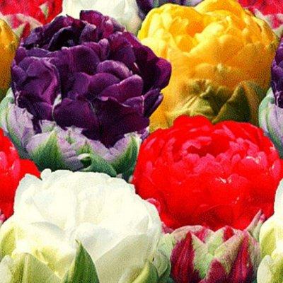 7 цветов!Остатки ликвидация! Скидки — Новинки — Рассада и саженцы