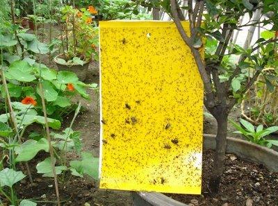 Все в наличии! Товары для дачи, сада! Быстрая раздача! — Средства для борьбы с насекомыми — Удобрения и агрохимия