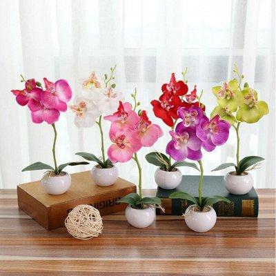 ЛЮБИМЫЕ БОКАЛЫ: Акция 1+1=3/Всем подарки за заказ!  — ГОРШКИ ДЛЯ ЦВЕТОВ — Комнатные растения и уход
