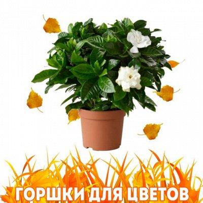 Нужная покупка👍 Открываем сезон посева — Горшки/ кашпо/ ящики🌷 — Кашпо и горшки