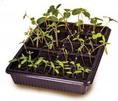 🌱 Цветущий сад🌱 Семена от А до Я! — Для выращивания рассады — Садовый инвентарь