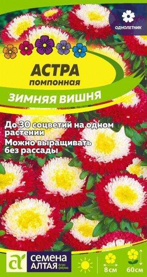 Астра Зимняя Вишня помпонная/Сем Алт/цп 0,2 гр.