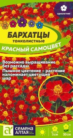 Бархатцы Красный Самоцвет тонколистн./Сем Алт/цп 0,1 гр.