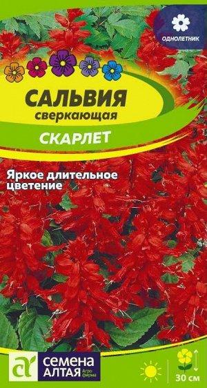 Цветы Сальвия Скарлет сверкающая/Сем Алт/цп 0,1 гр.