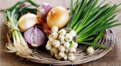 Семена Алтая. — Лук — Семена овощей