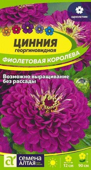 Цветы Цинния Фиолетовая Королева георгиноцв./Сем Алт/цп 0,3 гр.