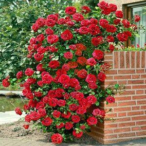 Бутик Одежды для Растений + Фильтры для Цветочных горшков — Зимние термоЛенты для плетистой Розы и обмотки Стволов — Садовый инвентарь