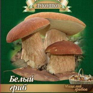 Товары на любой вкус и кошелек Актуальное наличие — ГРИБЫ, ГАЗОННЫЕ ТРАВЫ, Брусника — Мицелии грибов