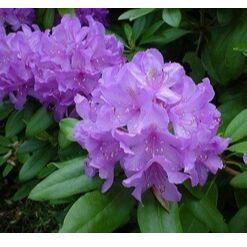 Бутик Одежды для Растений + Фильтры для Цветочных горшков — Зимние Домики для  РОДОДЕНДРОНОВ — Садовый инвентарь
