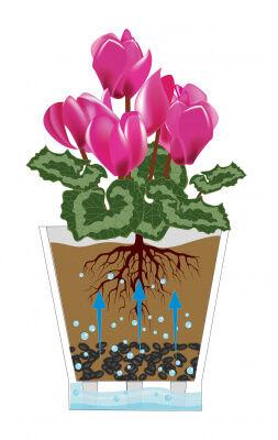 Кашпо Кашпо  5,0л Д21,5см с автополив. д/орхидей [ЛЕЯ] ПРОЗРАЧНЫЙ. Размеры изделия (ДхШхВ)215х215х205 мм