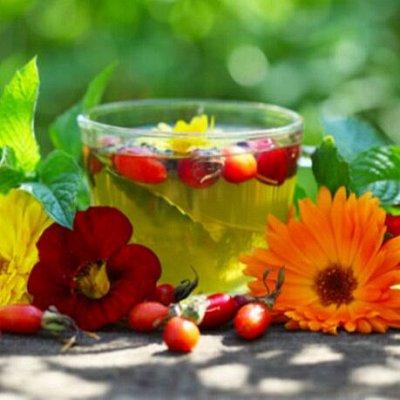 Огромный выбор чая и кофе на любой вкус — Травяные чаи, завары, травы, ягоды — Чай