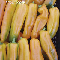Перец Капли медовый оранжевый