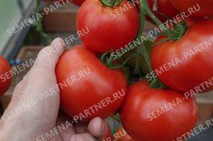 Семена Томат Красный факел F1 ^ 5 шт