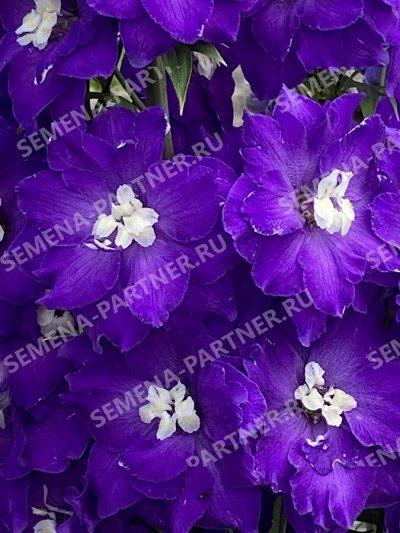 Семена Партнер и Семко - свободное в счете! В пути! — Цветы многолетние — Семена многолетние