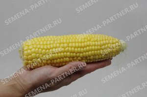 Кукуруза сахарная Спирит F1 ^(3Г)