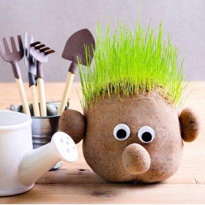 🍀LEROY MERLIN🍀Дом для дома! — 40% Эко-травянчик в ассортименте - 225 руб — Украшения для интерьера