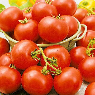 Семена Сады России. — Семена ПОМИДОРЫ — Семена овощей