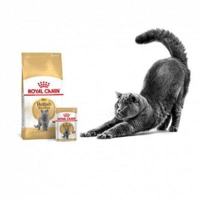 Догхаус. Акция Royal Canin  - 40% скидки!  — Влажные корма для кошек — Корма