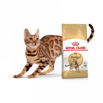 Догхаус. Акция Royal Canin  - 40% скидки!  — Сухие корма для кошек — Корма