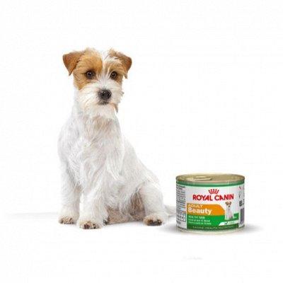 Догхаус. Акция Royal Canin  - 40% скидки!  — Влажные корма для собак — Корма