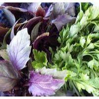 Дачный сезон! НЕ ПРОПУСТИ! Более 2000 видов семян! — Вкусная, полезная зелень — Семена зелени и пряных трав
