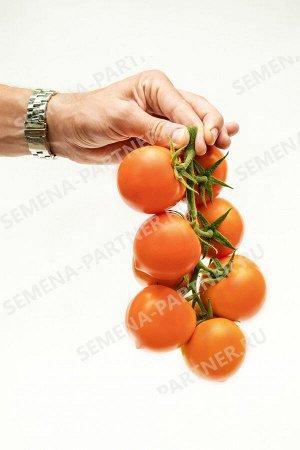 Семена Томат Золотая Канарейка F1 10 шт