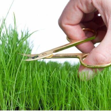 🍀LEROY MERLIN🍀Дом для дома! — 10-40% Все для газона / семена, удобрения и пр. — Семена газонных трав