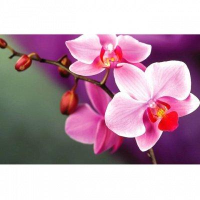 Наливная парфюмерия JN Франция!   — Духи JN женские — Женские ароматы