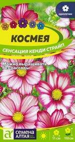 Цветы Космея Сенсация Кенди Страйп/Сем Алт/цп 0,5гр.