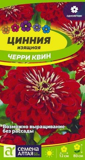 Цветы Цинния Черри Квин георгиноцветковая/Сем Алт/цп 0,3 гр.