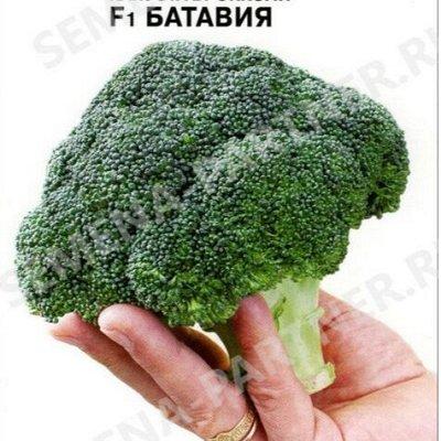 Семена Партнер и Смеко - свободное в счете! В пути! — Капусты прочие — Семена овощей