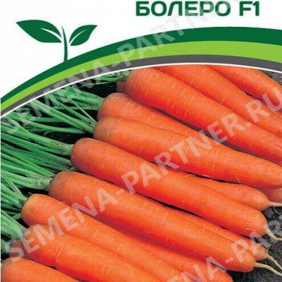 Семена Партнер и Смеко - свободное в счете! В пути! — Морковь, свекла, лук — Семена овощей