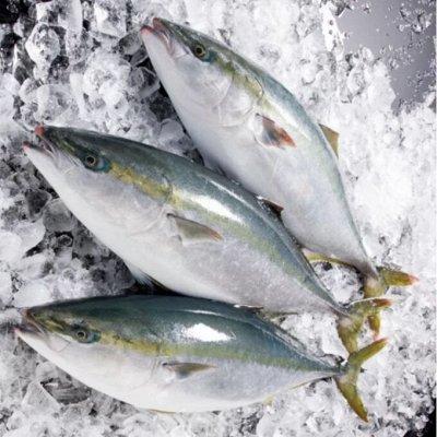 Форель! Палтус! Креветка! Фарш тунца! Новое поступление! — Лакедра! — Свежие и замороженные